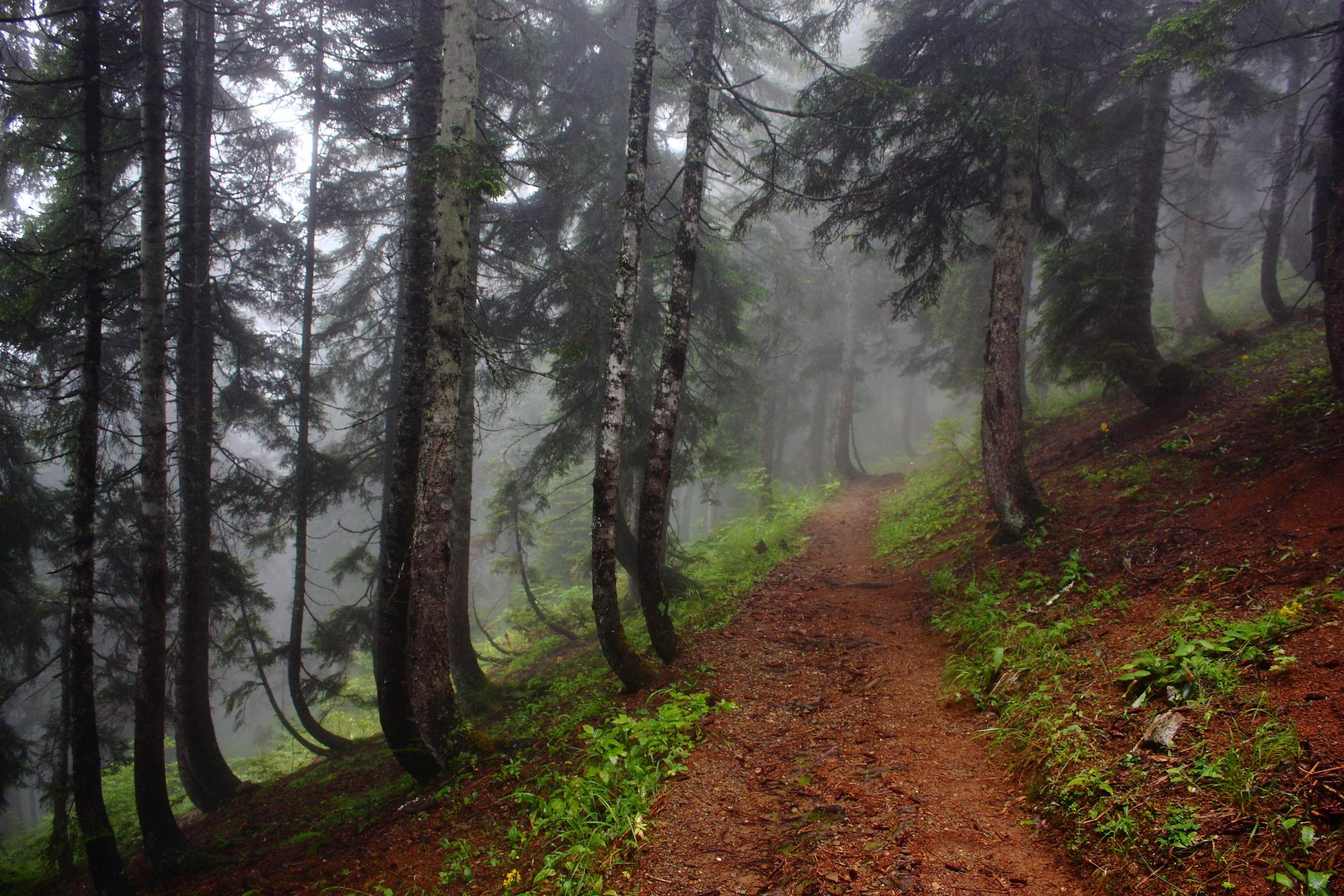 Pokut'dan Sal'a orman içinden yürüyüş