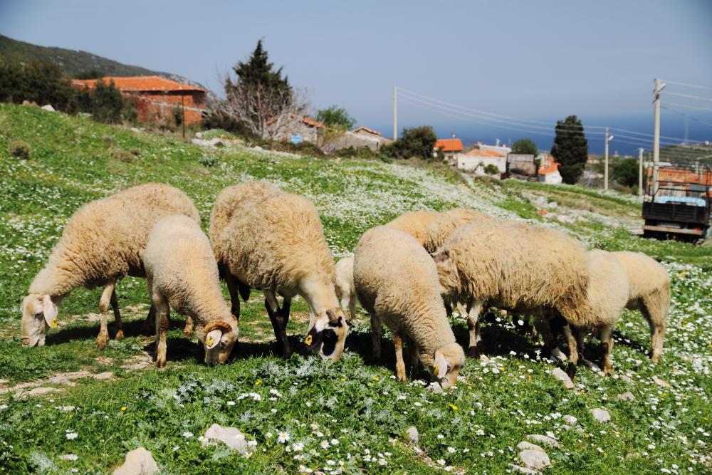 Kösedere Köyü'nün yüksekleri