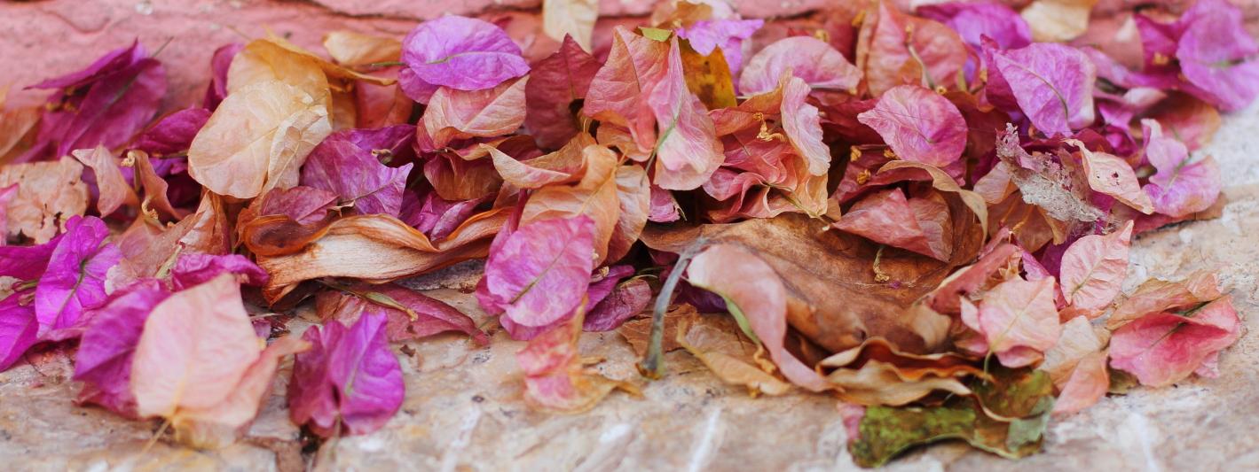 sokak taşları arasında savrulmuş begonvil yaprakları