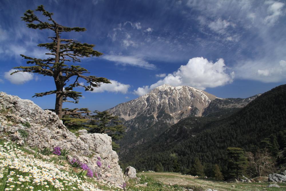 Beydağları Milli Parkı, Belen yaylası, yöresel sedir ağaçları ve karlı zirvesi ile Tahtalıdağ
