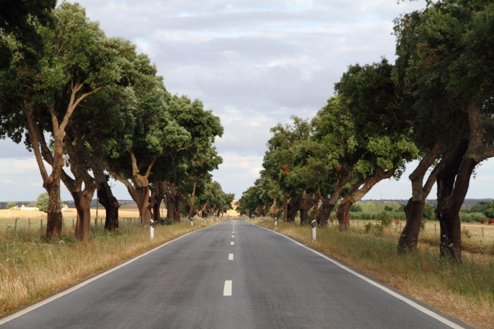 Portekiz yolları ve yol boyunca kabukları soyulmuş cork ağaçları