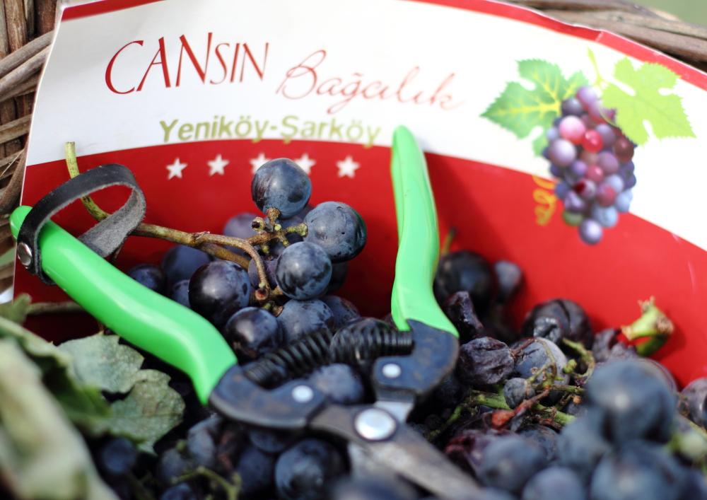 Cansın Bağcılık (Cansin's Wineyard)