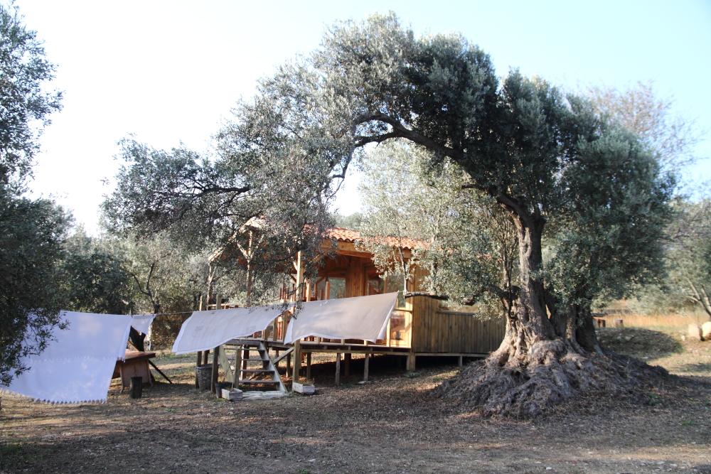 zeytin ağaçları arasında, poyraza karşı kurumuş mis kokulu çarşaflarda uyumanın keyfi de ayrı güzel!