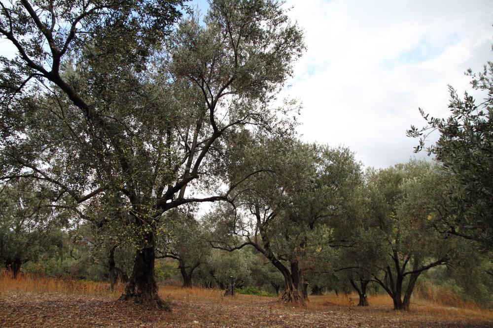 Urla Hasat çiftliği